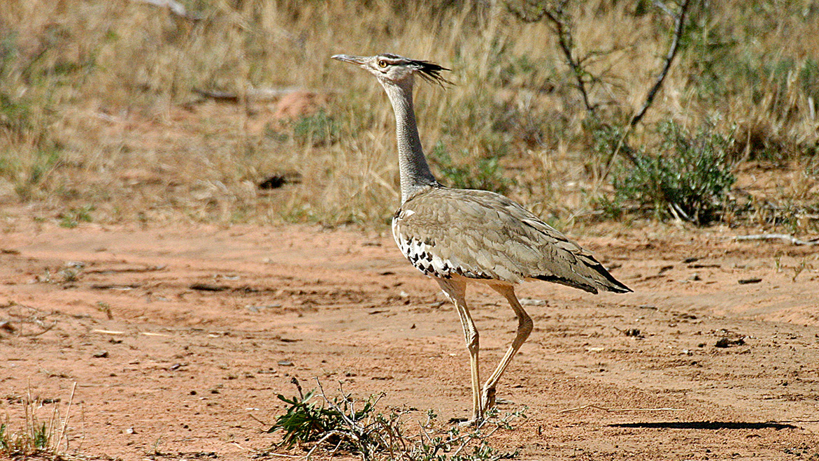 Waterberg Wilderness Fauna
